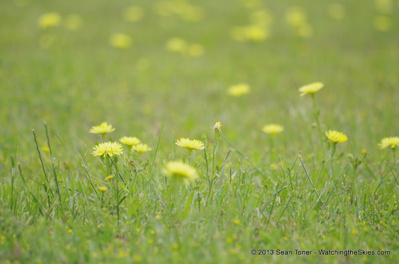 2013 Spring Flora & Fauna - IMGP6370.JPG