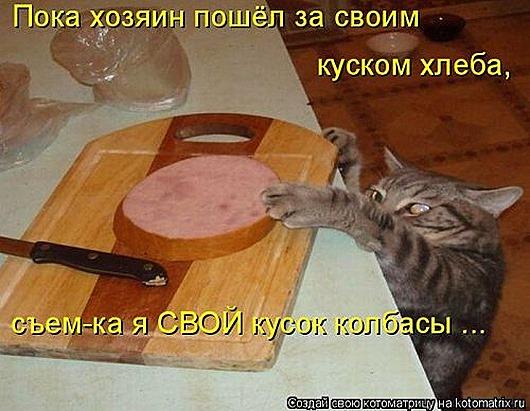 1411716327_kotomatricy-12
