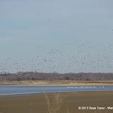 01-19-13 Hagerman Wildlife Preserve and Denison Dam - IMGP4105.JPG