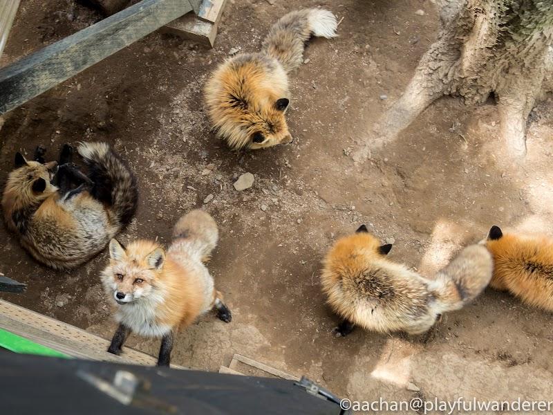 foxvil (44 - 70).jpg