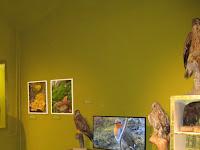 Részletek az Erdőjárók kalauza-Zemplén természeti értékeit bemutató kiállításból6.jpg