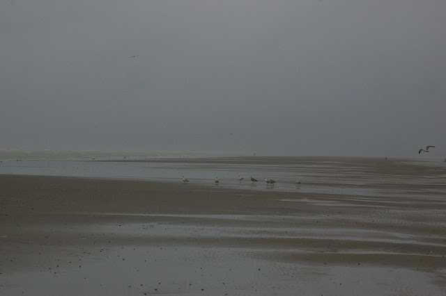Cayeux-sur-Mer (Somme), 1er janvier 2012. Photo : J.-M. Gayman