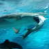 Female Shark in Seoul Aquarium Eats Male Shark Because He Kept Bumping Into Her