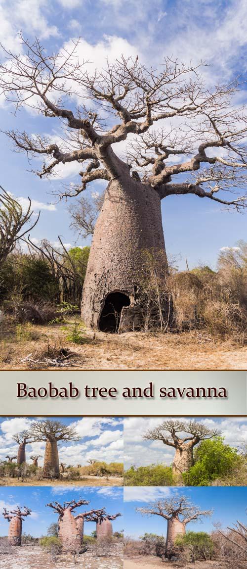 Stock Photo: Baobab tree and savanna
