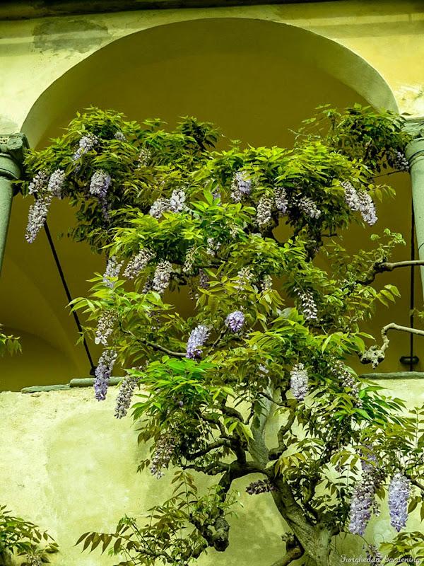 giardino pontignano 05