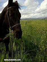 Photo: agriturismo vicino terme saturnia b&b girasole terzuolo www.pomonte.com orchidea