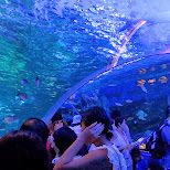underwater tunnel at the Shinagawa Aquarium in Shinagawa, Tokyo, Japan