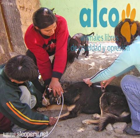 Asistencia Huancavelica por terremoto 2007 (7)