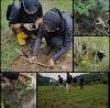 Harimau Sumatera Memasuki Pemukiman Warga, Tiga Ekor Ternak Milik Warga Menjadi Sasaran