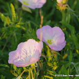 2013 Spring Flora & Fauna - IMGP6345.JPG