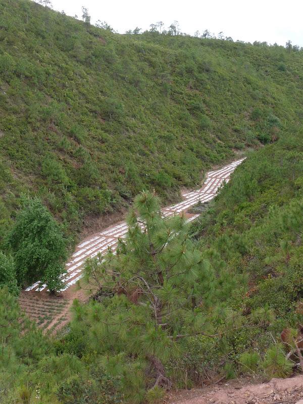 Chine . Yunnan.SHA XI 2 et retour à Lijiang - P1250356.JPG
