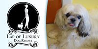Dog Resort Cedar Park Texas Lap of Luxury Dog Resort Logo