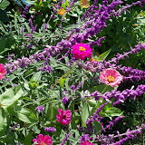 Gardening 2012 - 115_1561.JPG