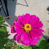 Gardening 2011 - 100_9298.JPG