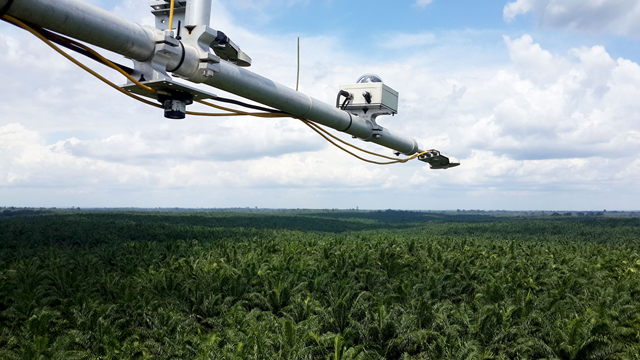 Radiation measurements above a mature oil palm plantation in Sumatra. Photo: Ana Meijide