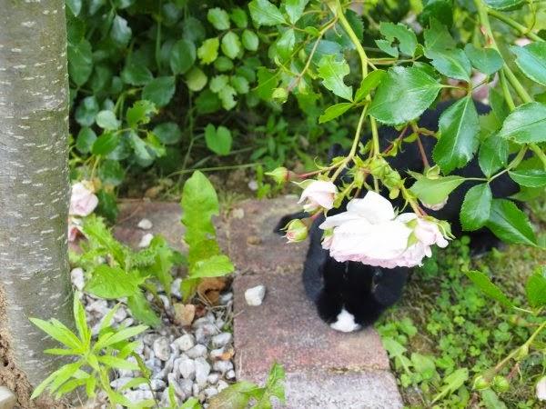 Prince, petit lapin noir-[adopté] Prince7-81f0d