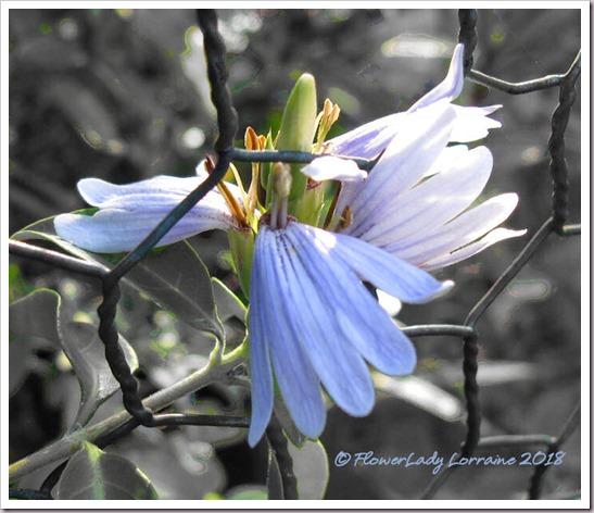 11-09-blue-lips