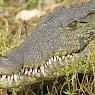 2014 - Botswana. Jeszcze więcej dzikich zwierząt