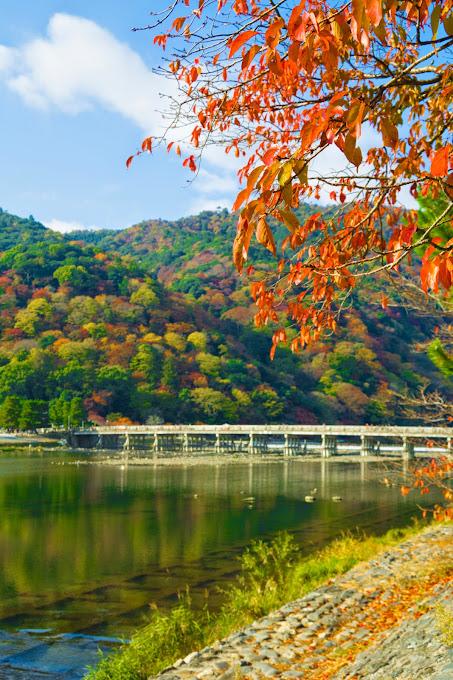 京都 渡月橋 紅葉 写真3