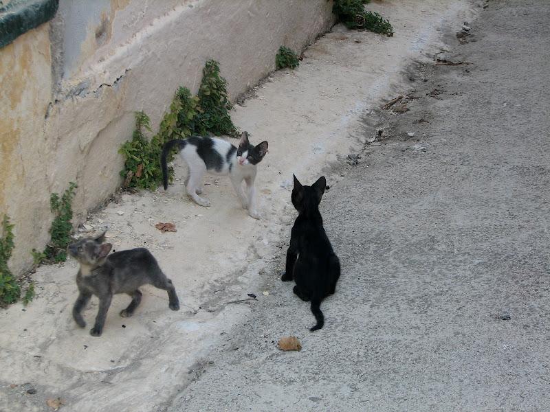 Wakacje w Zakynthos / Grecja - img_3729.jpg