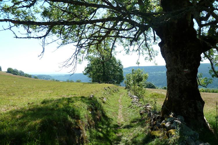 Le Cantal à pied - Le Tour du Volcan Cantalien - Du Prat-de-Bouc à Murat