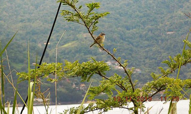 Divulgação/PlantVerd