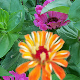 Gardening 2011 - 100_8230.JPG