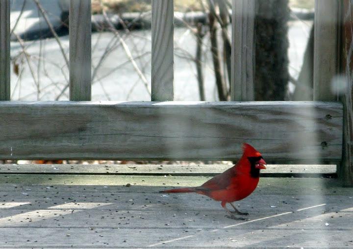Visiting Cardinal