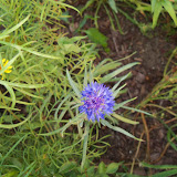 Gardening 2010, Part Three - 101_4305.JPG