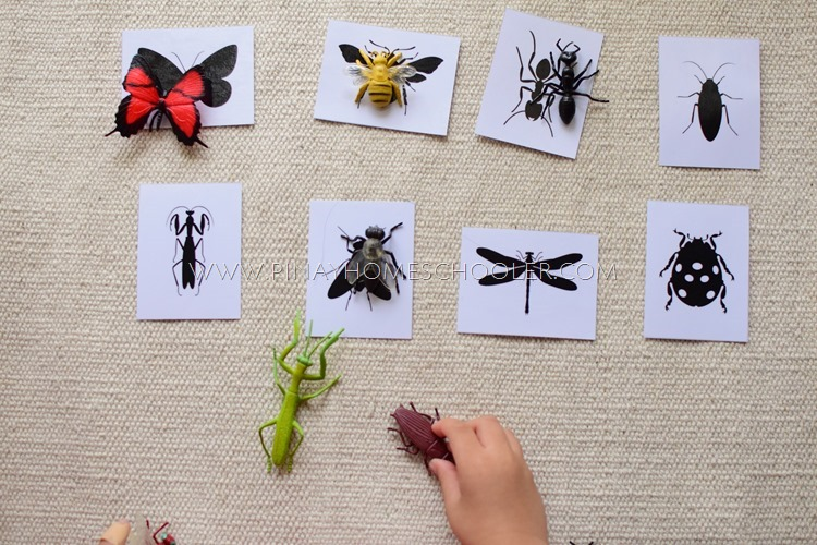 FREE Insects and Spider Silhouette Cards