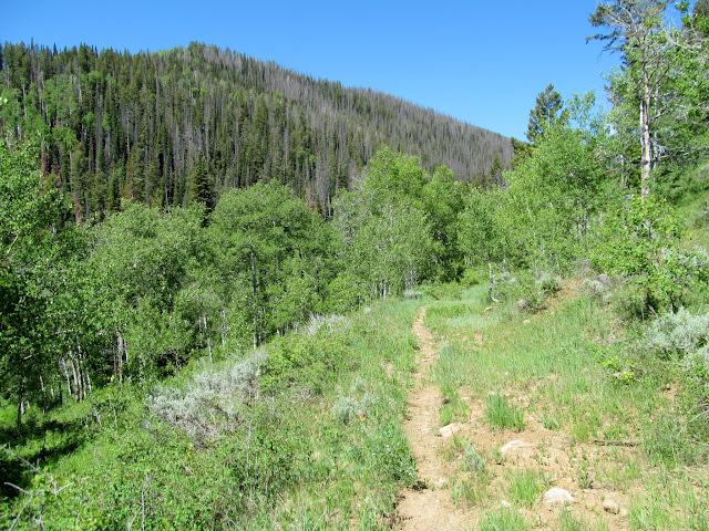 Trail as it enters Bulger Canyon
