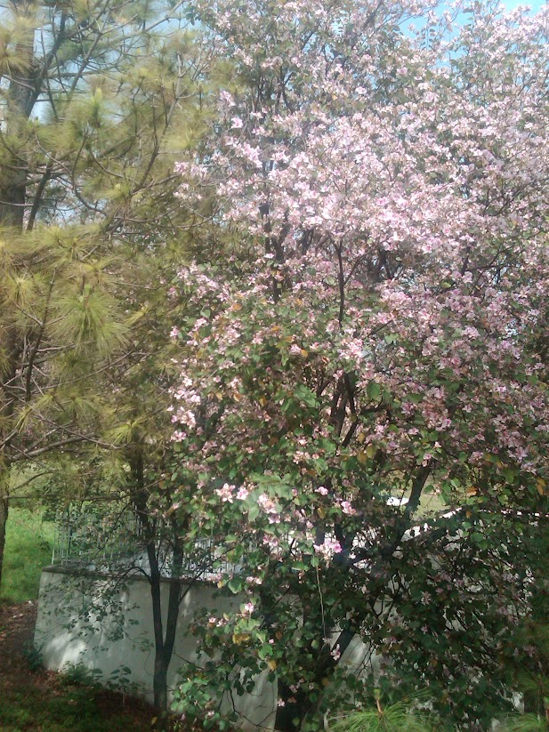 Blossom Tree with Pink Flowers