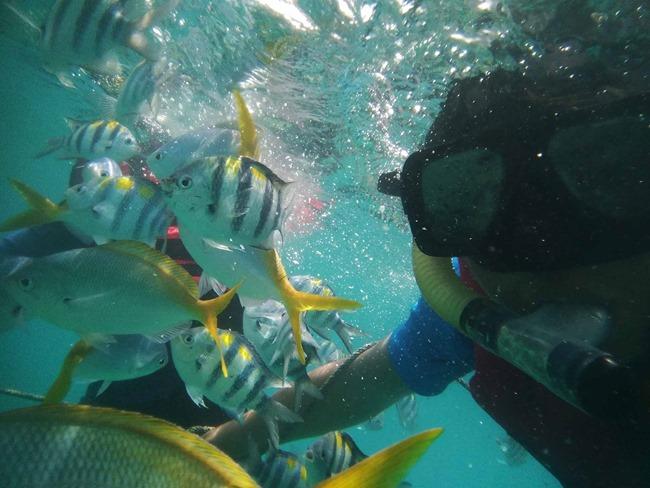 gambar cantik snorkeling di pulau renggis