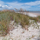 Pawleys Island Vacation Rentals LLC's profile photo