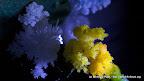 Wunderbare Welten der Kristalle - Kristallwelten