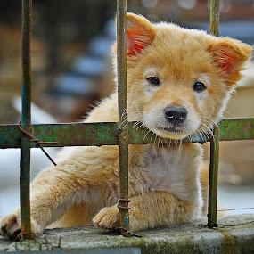 Hey Buddy by Kriswanto Ginting's - Animals - Dogs Puppies ( puppies, dog portrait, candid, puppie, puppy, dog, puppy portrait,  )