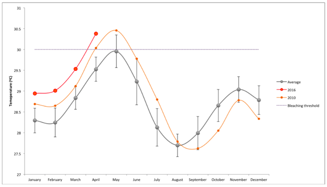 Seasonal variation in sea surface temperatures (SST) in Lakshadweep waters. The grey line shows the normal seasonal variation in water temperatures based on temperature records over the last 15 years – from 2000 to 2015. The light orange line shows how temperatures varied during the last El Niño year: 2010 – which resulted in major bleaching across the Lakshadweep. The dark orange lines shows current sea surface temperatures for the first few months of 2016 – already considerably worse than the last bleaching event. The bleaching threshold is around 30°C, representing the tolerance limit for most coral, beyond which they are most likely to start bleaching and dying. Graphic: NCF