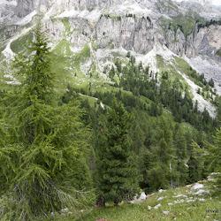 Murmeltiertrail 02.08.16-2720.jpg