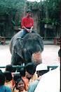 Tiger Zoo, bei Siracha, 2003