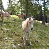 Wanderung mit Wanderführer Luis Königsanger 10.06.2016 - Escursione con guida Luis Monte Pascolo