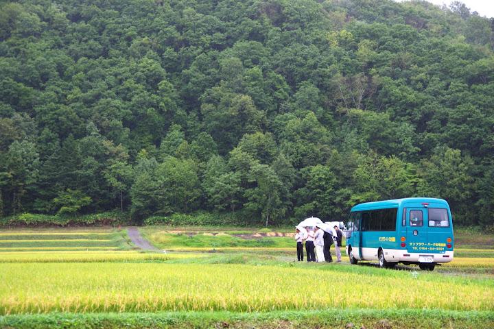 有機栽培米の圃場視察