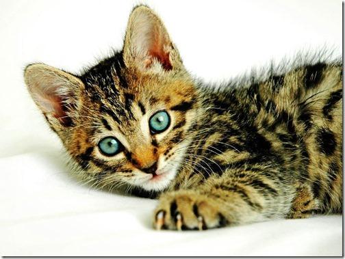 22 fotos de gats (20)