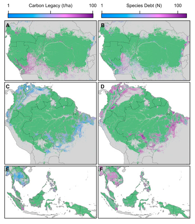 Magnitude of Carbon Emissions and Extinction Debts in the World's Tropical Forests in 2009. (A) and (B) show results for the Congo Basin, (C) and (D) for the Amazon, and (E) and (F) for SE Asia. See also Table S2. (A, C, and E) Carbon emissions. Maps display the (log-normal transformed) median carbon tons per hectare left to decay after 2009. (B, D, and F) Extinction debts. Maps show the (log-normal transformed) median number of forest-specific species committed to extinction as of 2009 due to past tropical deforestation. Graphic: Rosa et al., 2016 / Current Biology