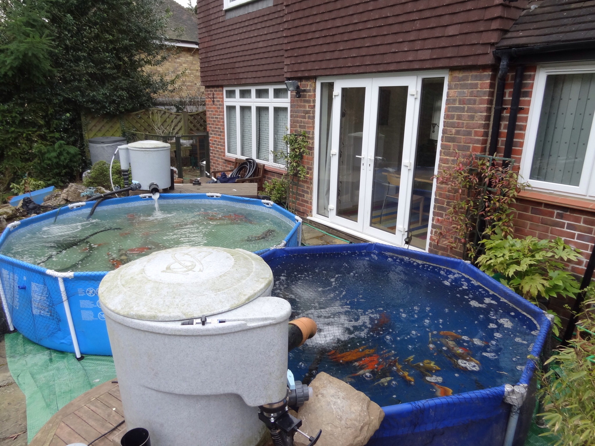 Mark hobden main koi pond build pre build koi into temp for Building a koi pond
