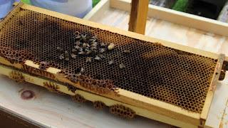 PLC Beekeeping Class 5/20/18 - IMG_8126.jpg