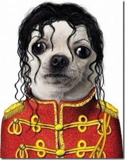 disfraces divertidos para perros  (32)