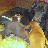 Gigi & her babies @ 4 weeks