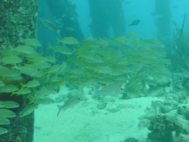 Bonaire 2011 - PICT0020.JPG