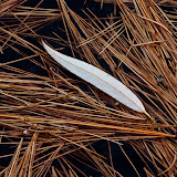 willow-leaf-and-white-pine-needles-frozen-in-ice_MG_2726-copy.jpg