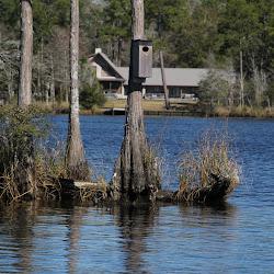 Fowl Marsh from Boat Feb3 2013 098